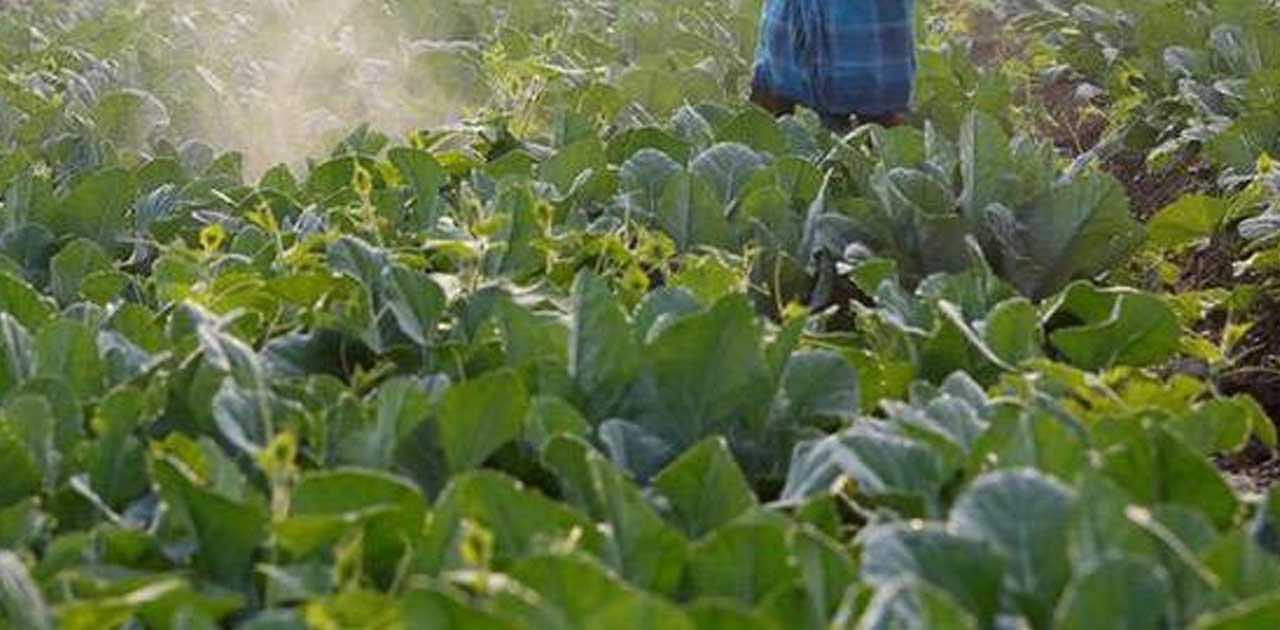 Image result for सब्जी की खेती